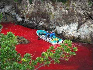 River of dolphin blood